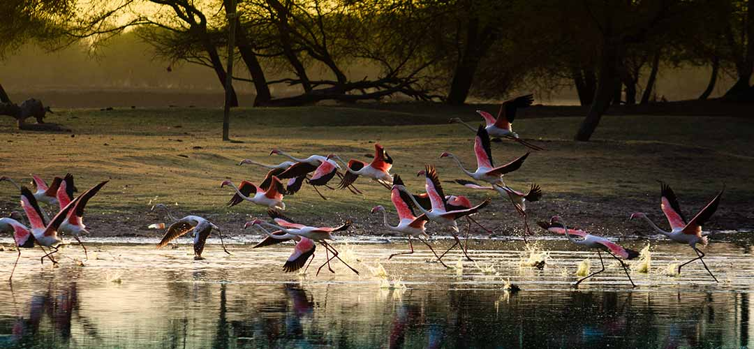 Sultanpur National Park Bird Sanctuary - a must visit for tourists in Gurgaon